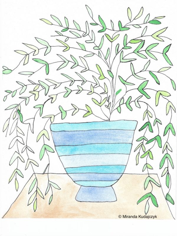 Watercolour painting of a green plant with long vines in a stripped blue and white vase on a wooden surface