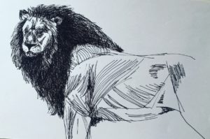 Pen (black) and paper sketch of a male lion