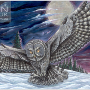 Image of a large grey owl flying over snow with a forrest in the backgrounders. It is night time and there is a large moon in the sky with wispy clouds