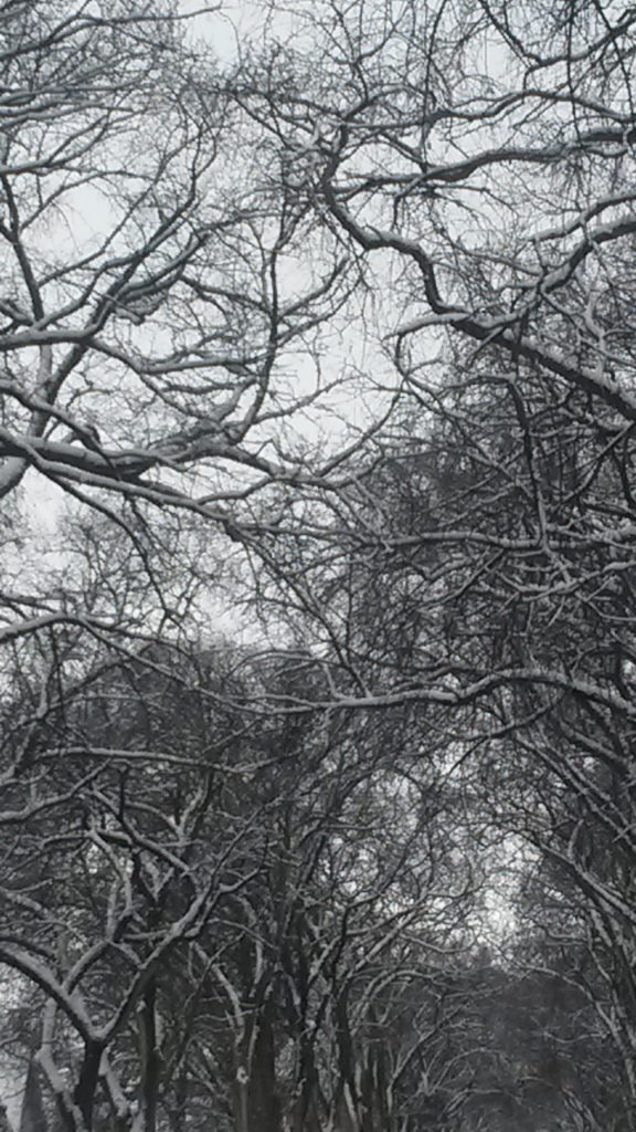 Photograph of branches criss crossing, perhaps in a wooded area. The branches are bare and look black against a white, perhaps snowy day.