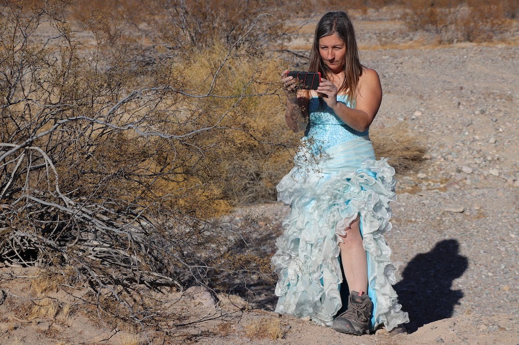 Photograph of Marie LeBlanc in a rocky and dry area with lots of scrub bushes. Marie is taking a photograph of the bushes with her cell phone. Marie is a thin white woman with straight long brown hair and is wearing a blue strapless dress with lots of frills at the bottom and work boots.